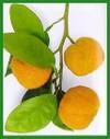 Orange_verte
